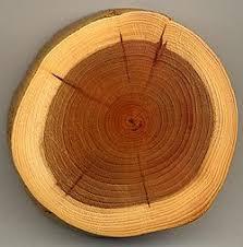 تحقیق درباره انواع چوب